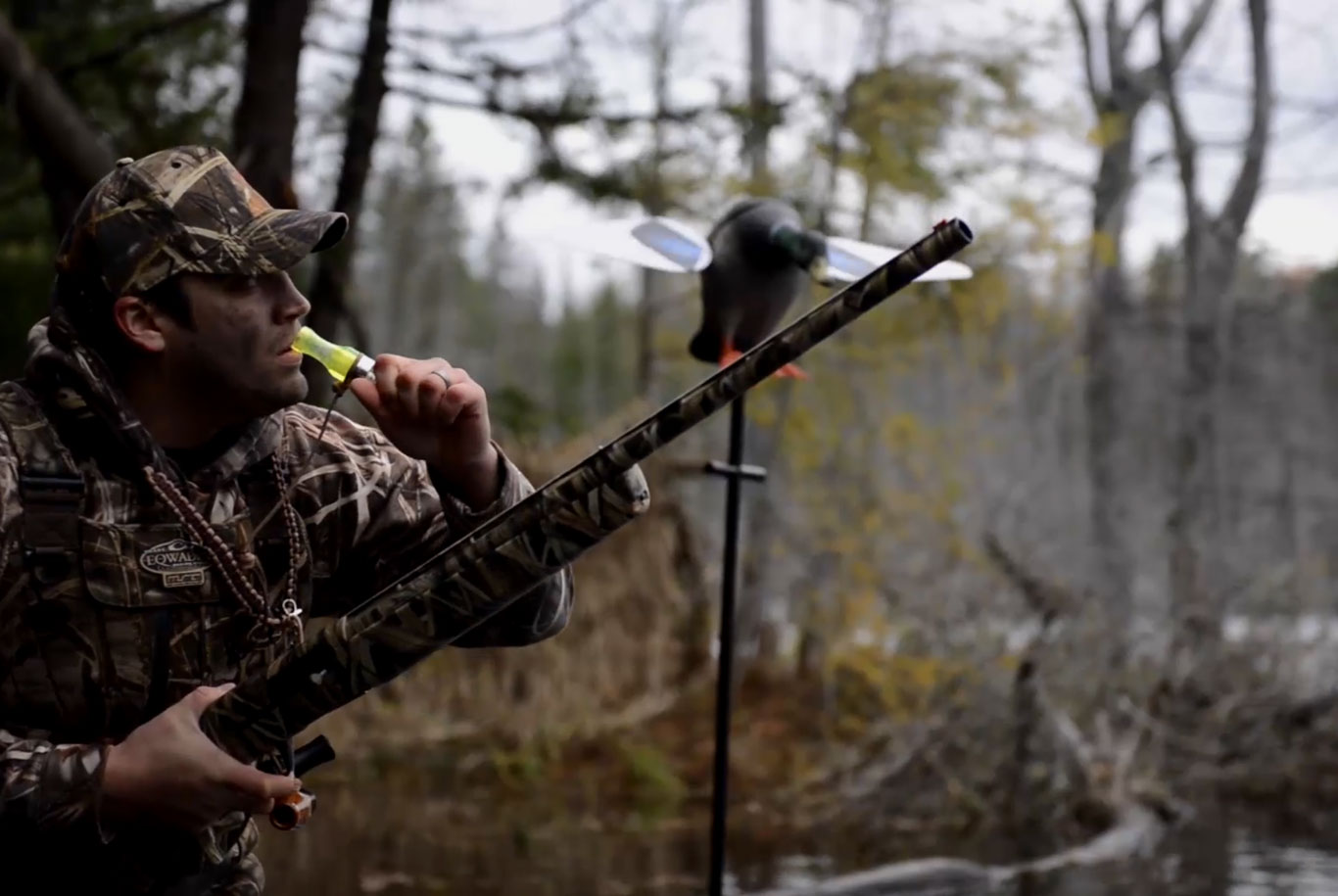 Hunter using a duck call from the blind
